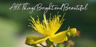 All Things Bright And Beautiful Hymn