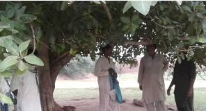 The_tree_where_his_body_was_found_in_Pakistan
